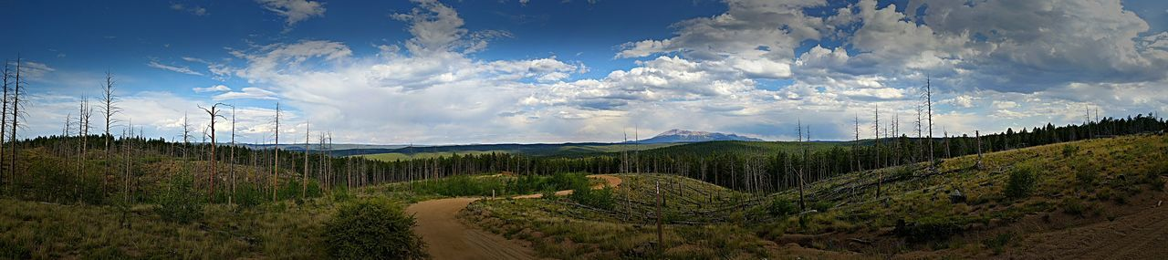 Sky Cloud - Sky Nature Beauty In Nature Blue Scenics No People Mountain Outdoors Landscape Freshness Colorado My Point Of View What A View Google Pixel XL Eye Em Nature Lover Tranquility Beauty Around Me Panaromic National Forest Pikes Peak In Colorado