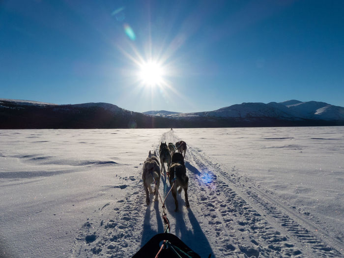 Wilderness Area Action Shot  Beauty In Nature Bright Sun Canada Clear Sky Day Landscape Lens Flare Mountain Mountain Range Out Outdoors Scenics Sled Dog Sled Dogs Snow Sun Sunlight Transportation Wilderness Wilderness Adventure Wildernessculture Yukon Territory