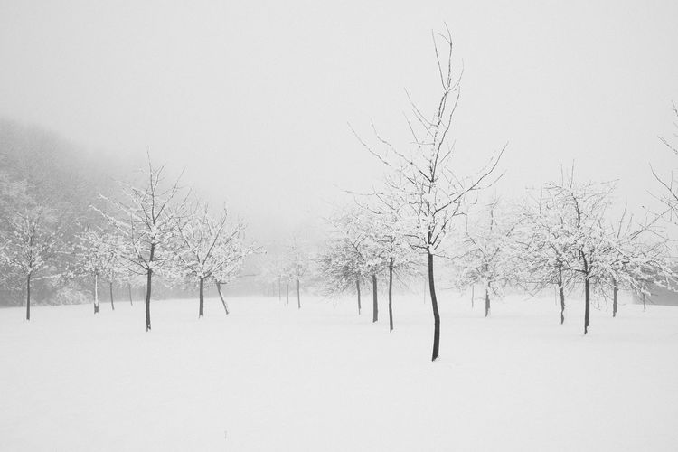Bare trees on snow covered land against clear sky