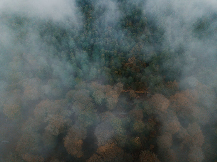Autumn Forest drone view Smoke - Physical Structure Backgrounds No People Day Cloud - Sky Abstract Full Frame Sky Nature Outdoors Environment Warning Sign Pattern Sign Digital Composite Fog Motion Environmental Issues Forest Pollution Abstract Backgrounds Smog Air Pollution