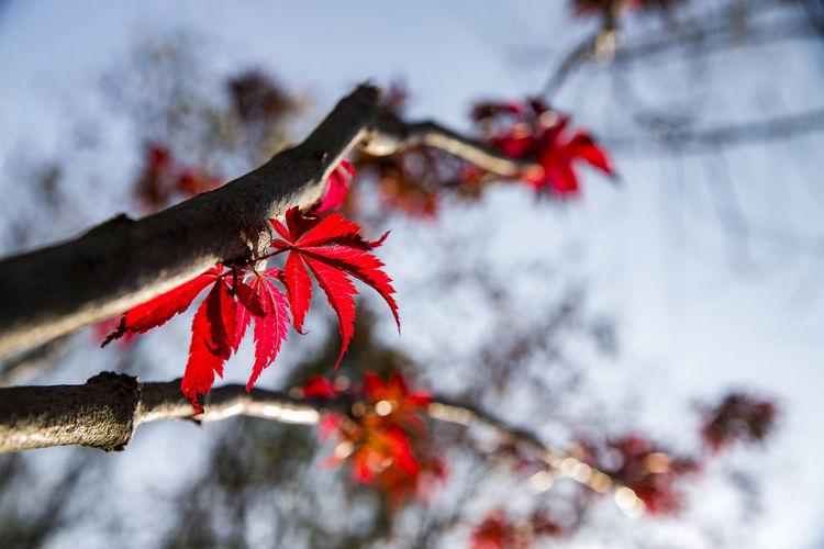 秋意 Autumn