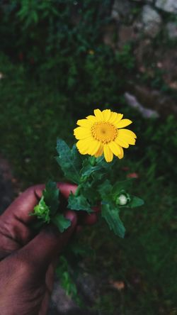 Human Hand Flower Human Body Part Holding Hand Nature Yellow Summer Plant One Person People Outdoors Fragility Freshness Close-up Flower Head Adult Day Freshness Tree Plant Beauty In Nature Water Selective Focus Social Issues