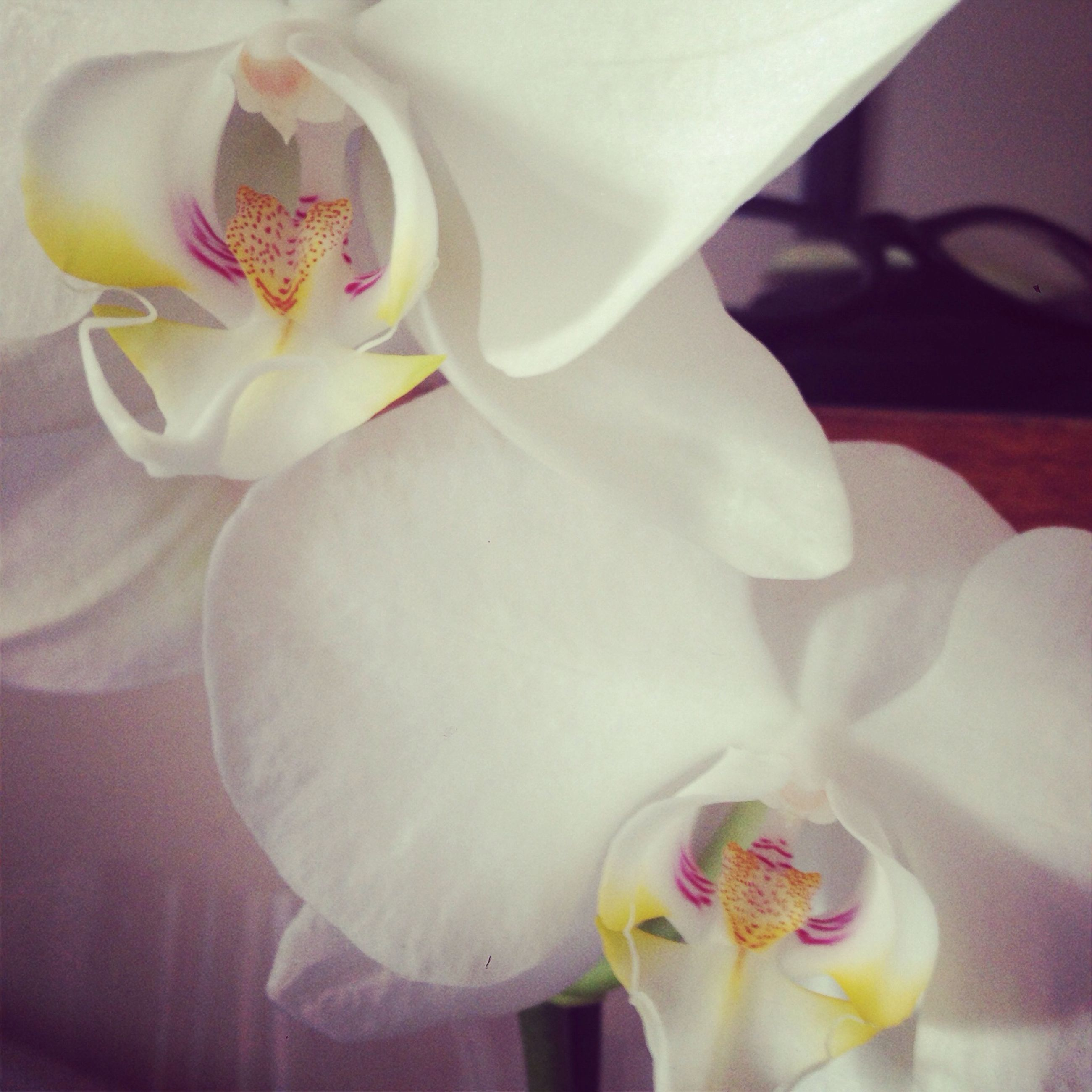 flower, petal, indoors, fragility, flower head, close-up, white color, freshness, vase, pink color, focus on foreground, home interior, decoration, orchid, beauty in nature, bouquet, rose - flower, nature, softness, no people