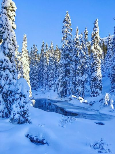 Stream in snowy landscape Snowcoveredtrees Sweden Cross Country Skiing Sälen Solitude Forest Scandinavia Winter Cold Temperature Nature Sky Beauty In Nature Snow Plant Day No People Tranquility Clear Sky Scenics - Nature Outdoors Frozen