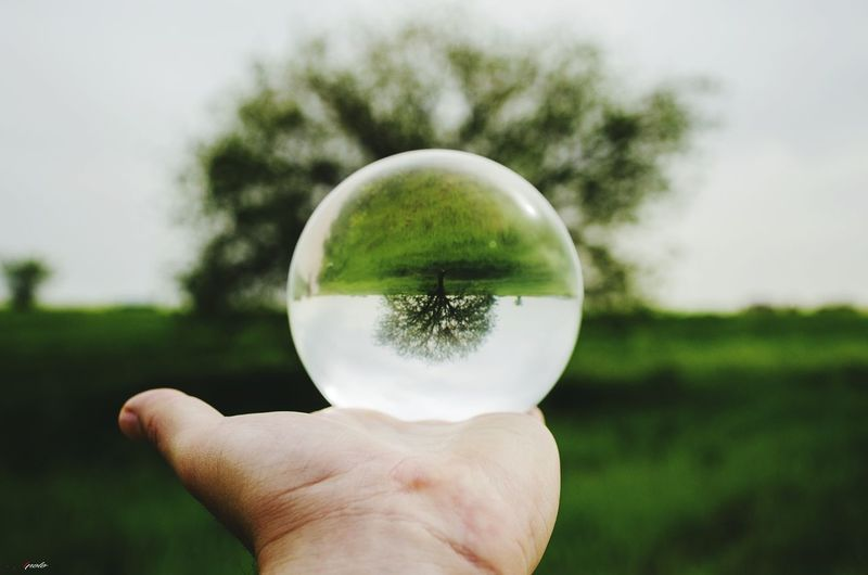 Árbol bola! Human Hand Water Holding Crystal Ball Close-up Grass Sphere Planetary Moon Ball Pool Ball