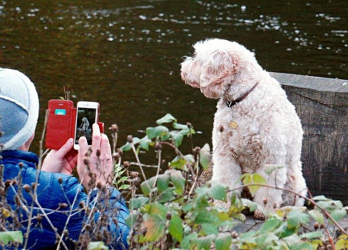 No doggy biscuits??? No look at camera!! Dog Curly Fur Pets Domestic Animals Photo Of A Photographer Photo Of A Phone Dog Posing Dogs Of EyeEm Outdoors Water One Animal Human Hand One Man And His Dog Animal Themes The Week On EyeEm Adult One Person Comical Funny