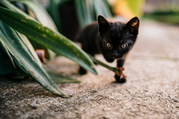 Portrait of kitten by plants on footpath