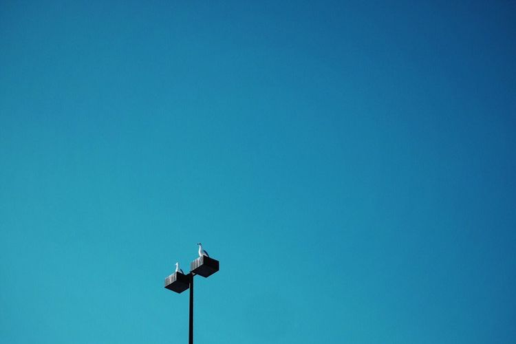 Two Birds. Two Birds Negative Space Bluesky Minimalism Parkinglot Tall Light Lookingup Showcase March