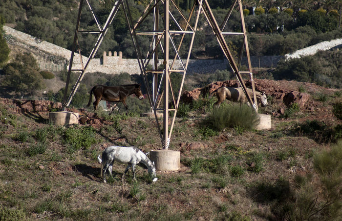 domestic and wild- ancient and current Ancient Wall Field Animal Themes Birds Day Electric Tower  Horse Mules Old And Current Outdoors Trio