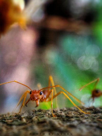 My first posting 😊 Macro Photography Close-up Close Up Photography Macro Ants Kerengga Macro Lens PhonePhotography First Eyeem Photo