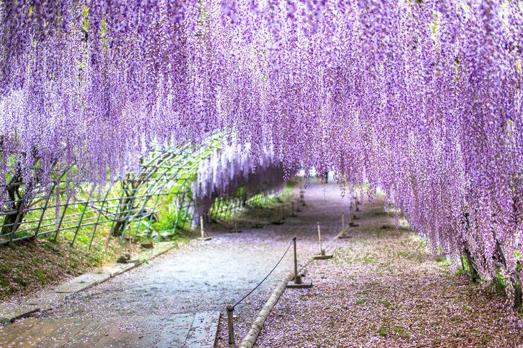 Scenic view of purple flowering plants on land during rainy season