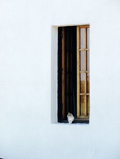 Pasando la tarde Architecture Built Structure Close-up Wood - Material No People Day Indoors  Building Exterior Cat Simple