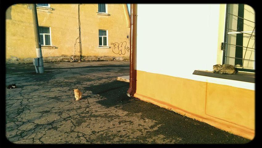 Latvia Olaine Railways Station Cats