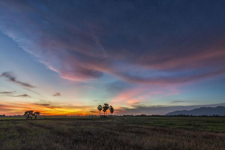 Súnet on field Beauty In Nature Cloud - Sky Field Grass No People Sunset Tree