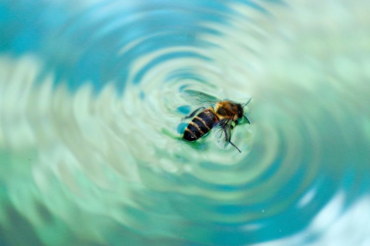 High angle view of bee in water