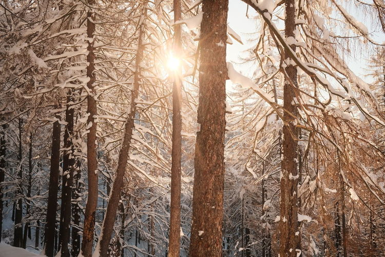 Sun shining through trees in forest during winter