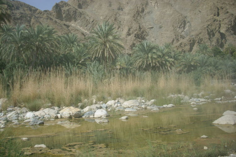 Water in desert hills of oman Hills Desert Palm Tree Palm Walid Beauty In Nature Nature Reflection Scenics Tourism Tranquil Scene Tree Vacations Water Waterfront Wilderness No People Holiday Vacation Mountain Nature Photography Horizon Over Water Sea River Idyllic