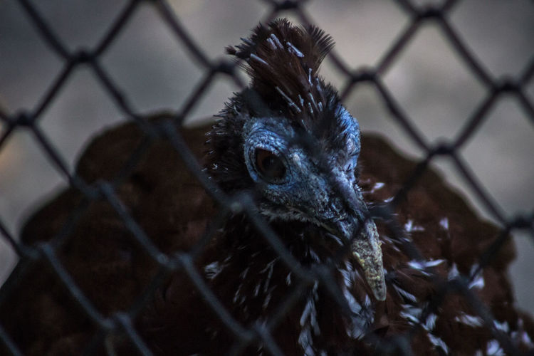 Animal Head  Animal Themes Animals In The Wild Beak Beauty In Nature Bird Bird Of Prey Branch Chainlink Fence Close-up Focus On Foreground Looking Nature No People One Animal Selective Focus Wildlife Zoology