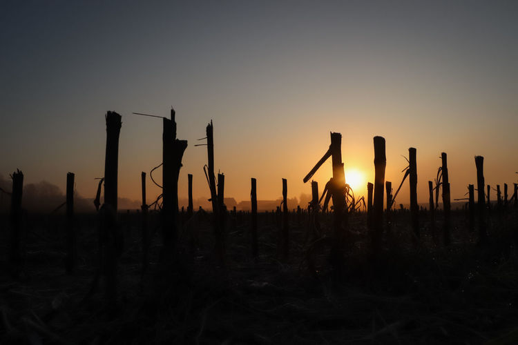 Silhouette wooden posts on field against sky during sunset