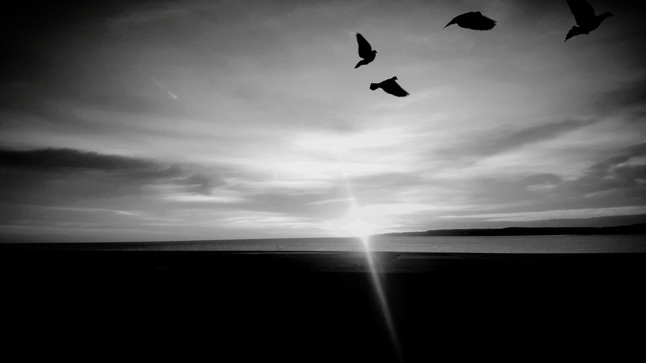 silhouette, sky, nature, scenics, flying, bird, beauty in nature, animal themes, no people, outdoors, sunset, tranquil scene, tranquility, animals in the wild, horizon over water, sea, mid-air, cloud - sky, one animal, water, day, spread wings