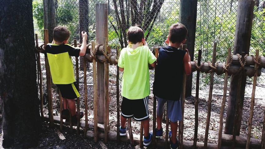 Zoo Kidsphotography Florida Westpalmbeach