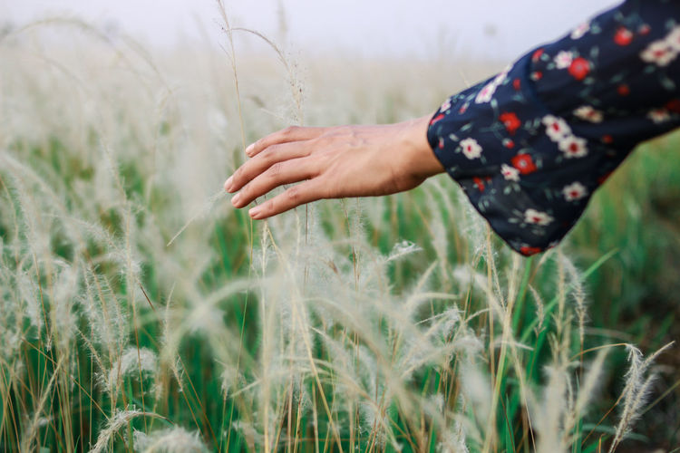 Plant Land Field Hand One Person Human Hand Agriculture Rural Scene Crop  Human Body Part Growth Selective Focus Cereal Plant Nature Farm Day Landscape Touching Wheat Outdoors Human Arm Farmer Human Limb
