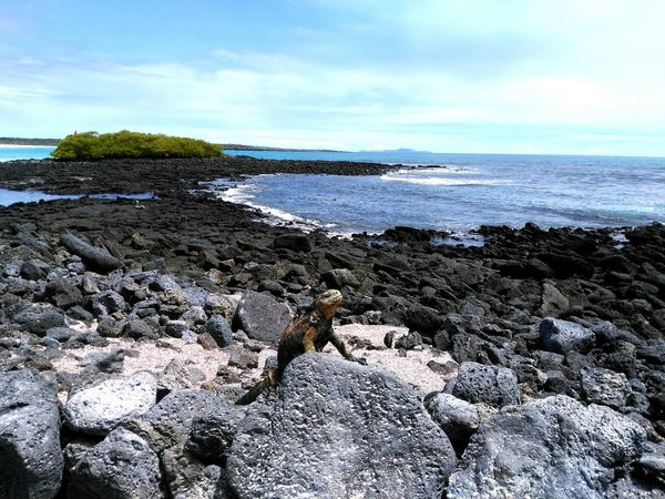 Sea No People Wildlife Beauty In Nature Travel Destinations Paradise Tranquil Scene Postcard Leguan Animal Wildlife Nature Makes Me Smile Dreamland Galapagos Santa Cruz Galapagos