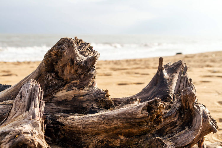 Snag on a deserted beach Land Beach Sea Wood - Material Driftwood Focus On Foreground Nature Wood Sky Tranquility Water Sand Close-up No People Day Beauty In Nature Scenics - Nature Horizon Over Water Tree Outdoors Dead Plant Bark