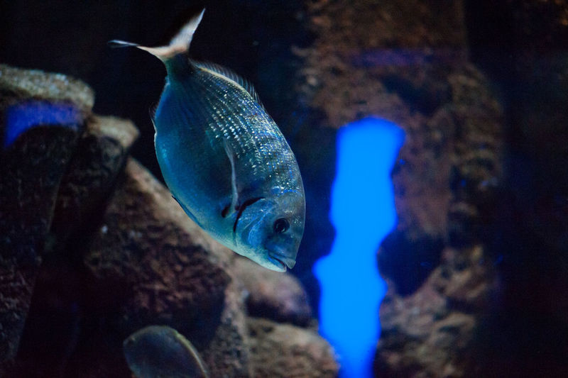#beautiful #amazing #blue #coral #aquarium #fish #ocean #beautiful #amazing #blue #aquarium Macro Photography #aquariumfish #bigfish #Blue #coral #coralreef #coralreefs #exotic Fish #fish #aquarium #fishtank #TagsForLikes #fishporn #instafish #instagood #swim #swimming #water #coral #ree #aquarium Macro Photography #aquariumfish #Blue #coralreef #coralreefs #exotic Fish #fish #fish #aquarium #fishtank #TagsForLikes #fishporn #instafish #instagood #swim #swimming #water #coral #reef #reeftank #tropical #tropicalfish #aquaria #photooftheday #saltwater #freshwater #beautiful #ocean #watertankx #fish Eye #fish Macro Photograpy #fishtank #mediterraneanfish #Moray #Moray Eel #Nature  #ocean #OceanDrive #shark #UNDERWATER #underwater Photography Aquarium