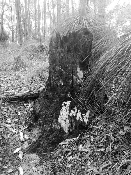 Australian Outback Australian Australia Bush Blackandwhite IPhoneography