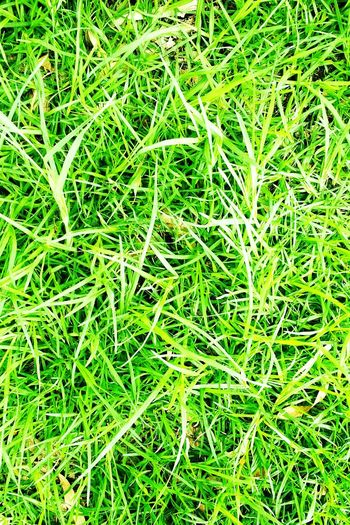 Appreciate the smallest things, every little detail. Card Cards Postcard Calendar Picture Perfectpicture Perfectgrass Perfectlygreen Grass Nature Greengrass Grasse Green Green Color Green Nature Prefect Easyontheeye
