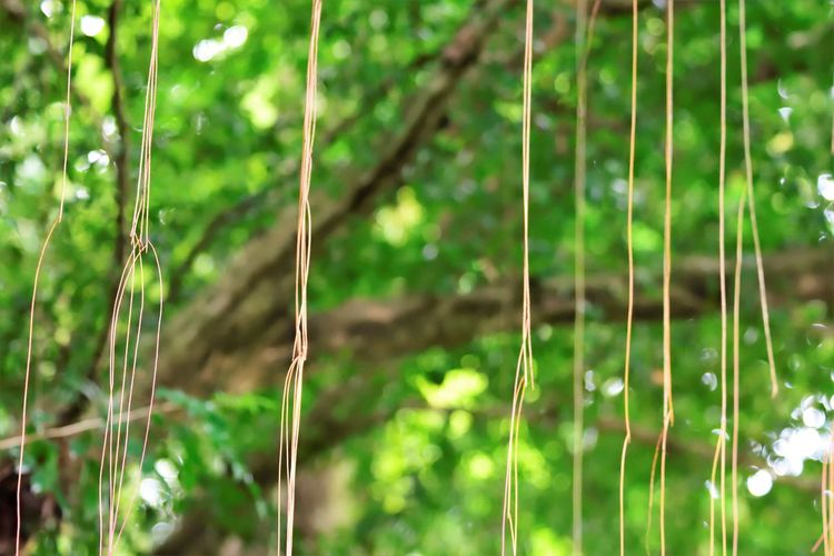 Wildlife and forestry Bamboo - Plant Beauty In Nature Close-up Day Field Focus On Foreground Forest Grass Green Color Growth Land Leaf Nature No People Outdoors Plant Plant Part Selective Focus Sunlight Tranquility Tree