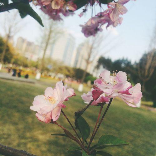 🌱春 🔖 Enjoying Life 记