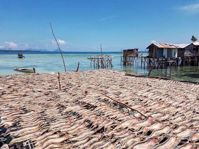 Salted fish drying in the sun in Omadal Island Sea Island Living Tourist Destination Travel Photography Semporna Malaysia Amazing Destination Travel Caroline Majanil Sabah Water Outdoors Beautiful Omadal Island EyeEm Salted Fish Tropical Living Sabah, Malaysia Borneo Travel Destination Ikan Masin Nature Beauty In Nature Scenics