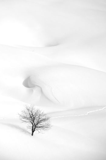 Minimal Minimalism Landscape Blackandwhite Black And White Nature Trekking Alpes Travel Womanartist Photooftheday Nikon NikonD7500 Mountain View Winterscapes Mountains Tree Alone Peaceful Graphic Snowscape Snow Cold Temperature Winter Mountain Landscape Deep Snow Snowcapped Mountain Powder Snow Fairy My Best Photo