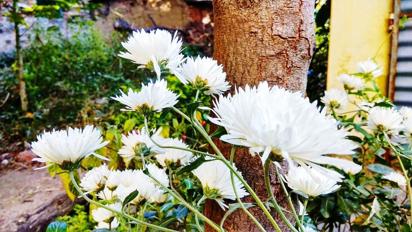 Flowers EyeEm Selects Flower Head Flower Petal White Color Close-up Plant Blooming