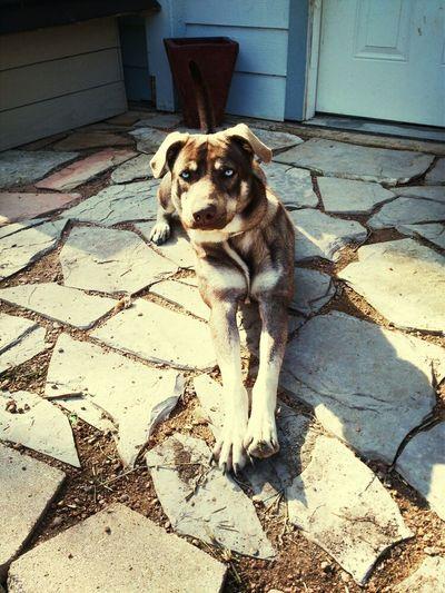 Matts Dog Is Cute <3