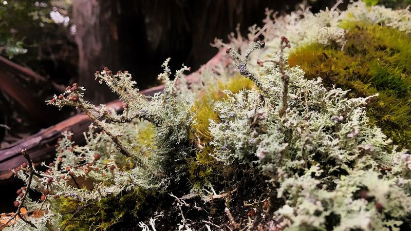 Micro climate of the #mountfieldnational park Tasmania Mountfield National Park Nature Growth No People Plant Outdoors Beauty In Nature Day Close-up Fragility