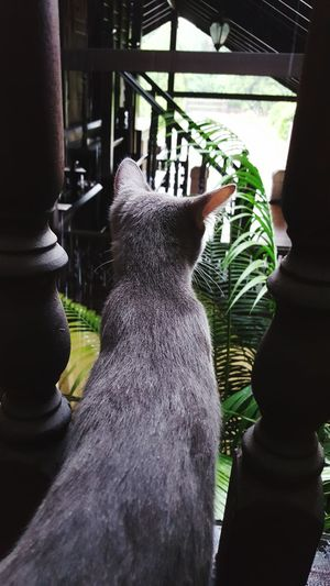 Close-up of hand feeding cat in greenhouse