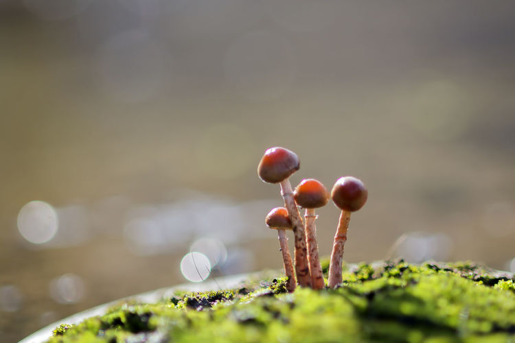 background of grass and mushrooms with bokeh Food Selective Focus Growth Close-up Freshness Healthy Eating No People Day Food And Drink Fruit Plant Beauty In Nature Wellbeing Nature Moss Red Green Color Focus On Foreground Vegetable Outdoors Surface Level