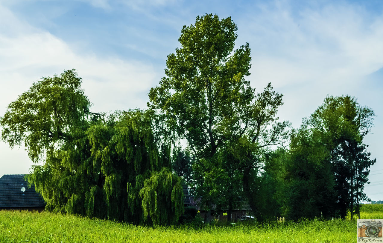 tree, growth, sky, green color, nature, tranquility, no people, beauty in nature, grass, day, cloud - sky, tranquil scene, field, outdoors, scenics