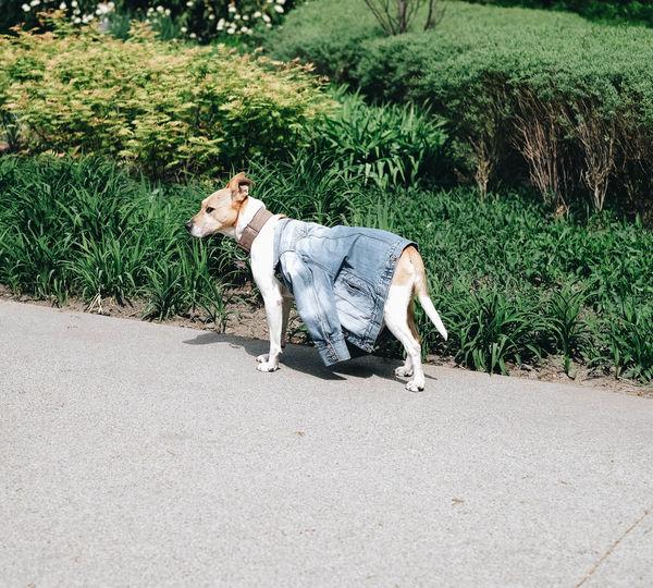 Doggo with