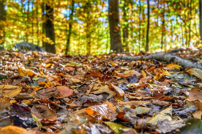 Fall Walk Low Angle View EyeEm Selects Tree Forest Leaf Autumn Tree Trunk Change Multi Colored WoodLand Close-up Landscape