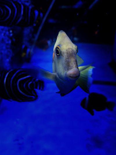 Animals Fish IPhoneography Underwater Fisheye Eyemphotography