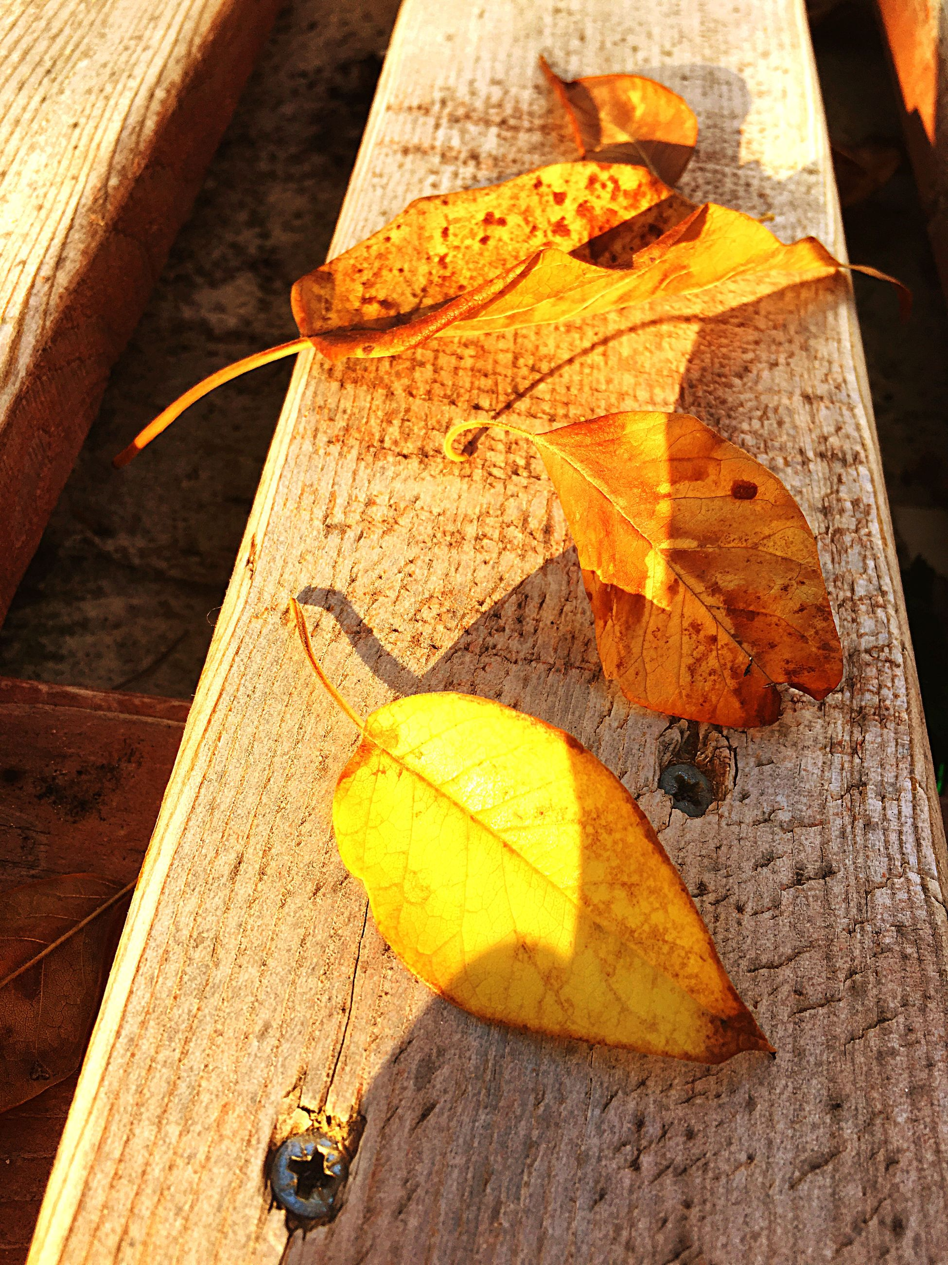 leaf, autumn, high angle view, change, season, yellow, close-up, wooden, deterioration, maple leaf, tranquility, fallen leaf, fallen, nature, outdoors, bad condition, no people