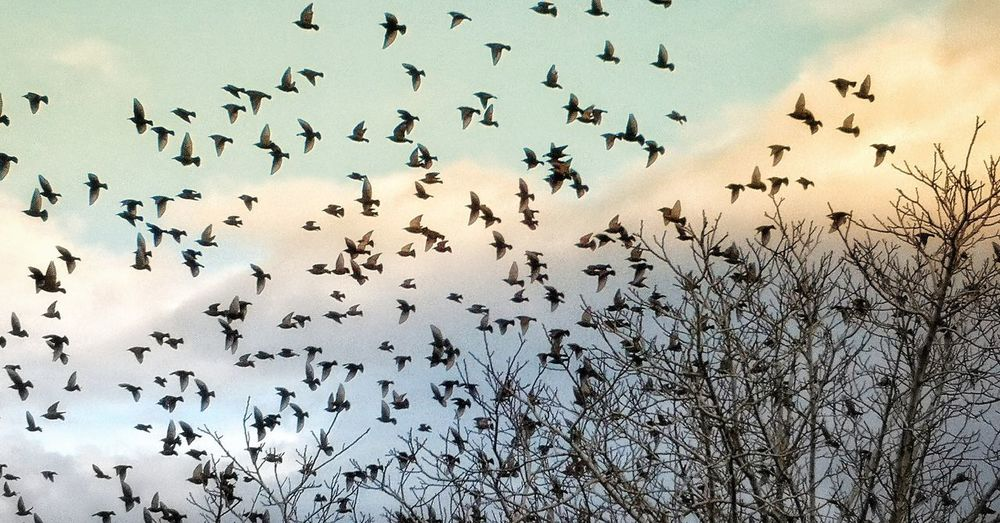 Bird Flying Colony Mid-air Flock Of Birds Migrating Bird Of Prey Togetherness Animal Themes Sky Animal Migration