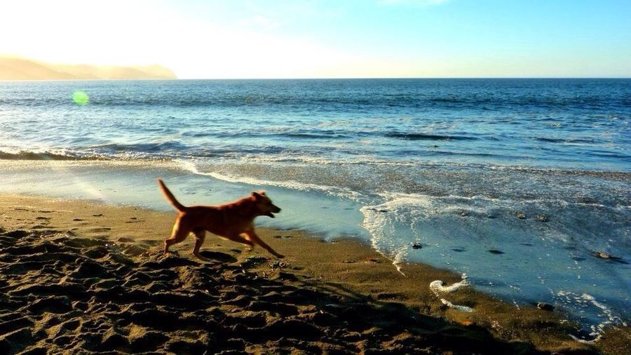 Beach dog... Dog Beachphotography Animals
