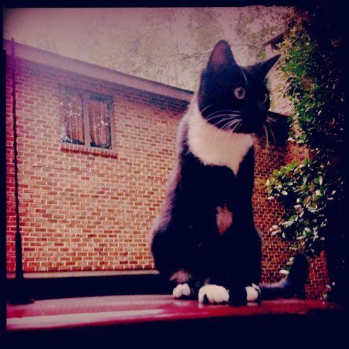 This cat's name is El Subcomandante Marcos Aurelio.