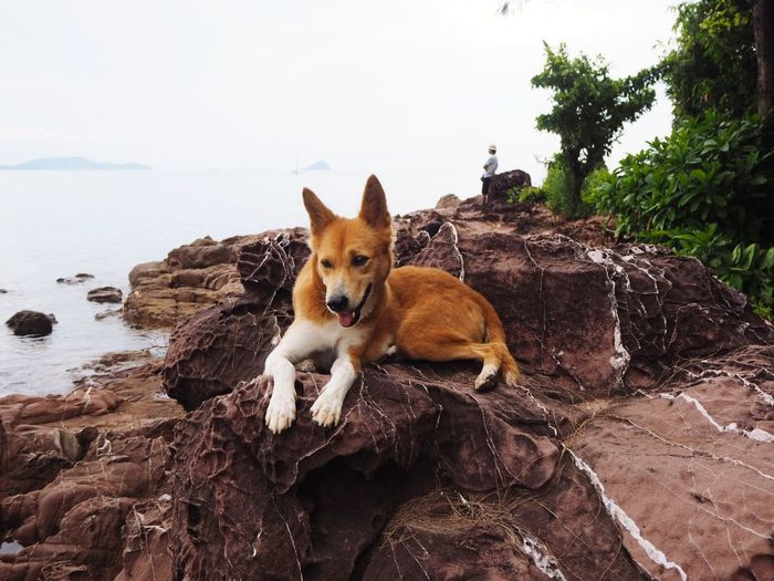 Dog resting on rock at beach