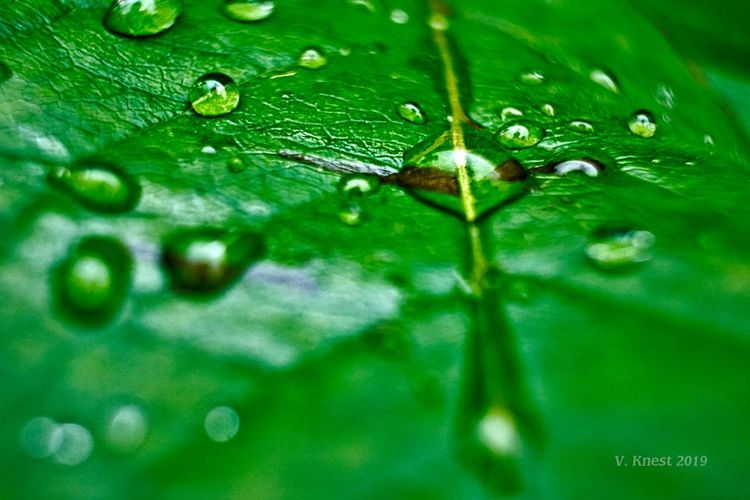 Waterdrop on a